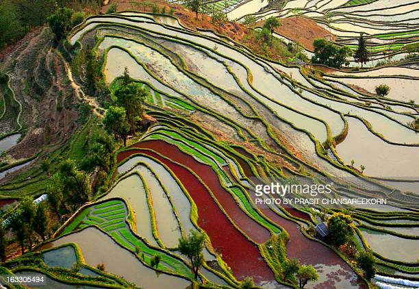 yuanyang rice terrace - yuanyang stock pictures, royalty-free photos & images