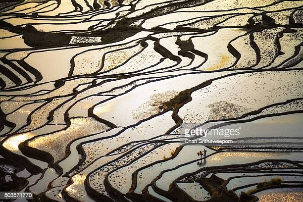 Yuanyang rice terrace, Yunnan, China