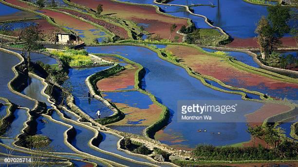 Yuanyang rice terrace, Yunnan, China