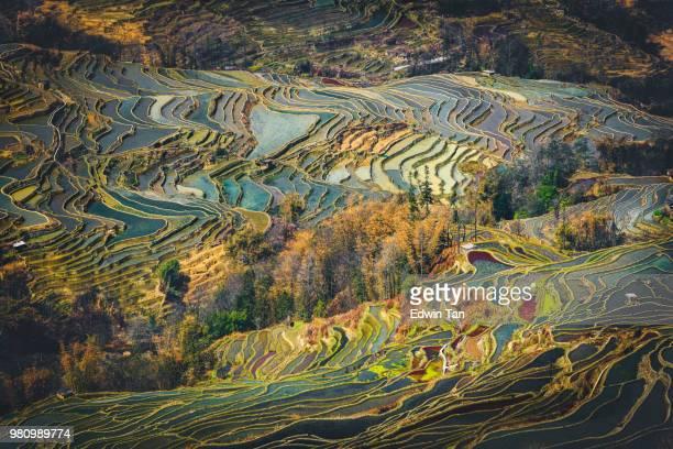 yuanyang rice terrace  , yunnan china - yuanyang imagens e fotografias de stock