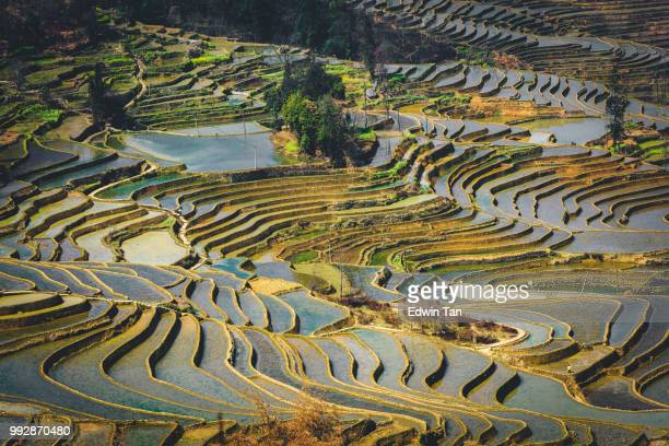 yuanyang rice terrace , yunnan china - yuanyang stock pictures, royalty-free photos & images