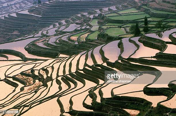 yuanyang rice terraces at sunrise - yuanyang stock pictures, royalty-free photos & images