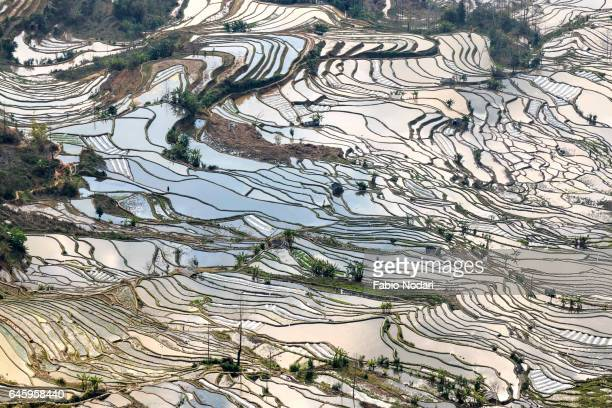 yuanyang rice terraces in yunnan, china, one of the latest unesco world heritage sites - yuanyang stock-fotos und bilder