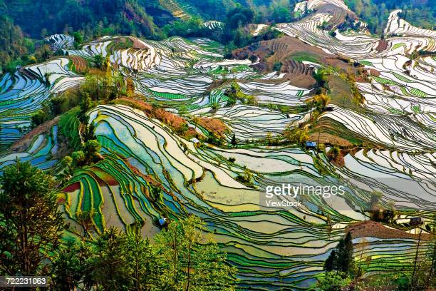 yuanyang terrace of honghe county,yunnan province,china - yuanyang stock pictures, royalty-free photos & images