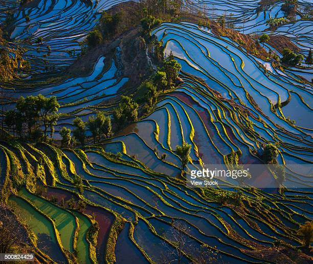 yuanyang terrace,yunnan,china - yuanyang stock pictures, royalty-free photos & images