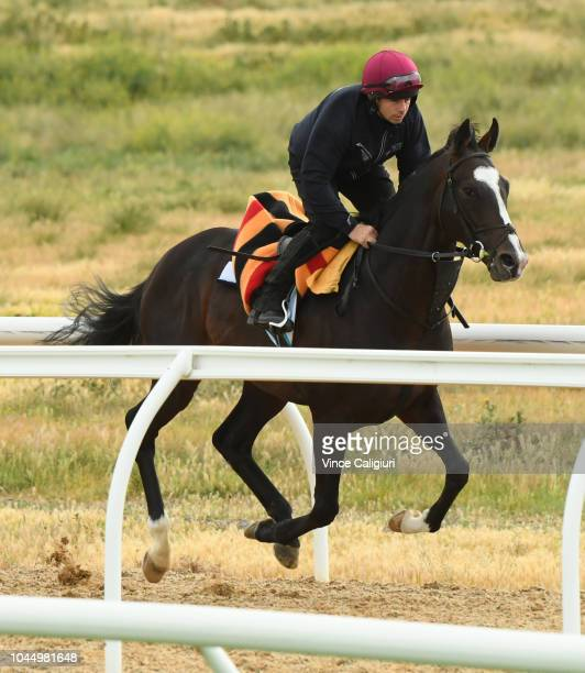 Yucatan gallops during a trackwork session at Werribee Racecourse on October 3 2018 in Melbourne Australia