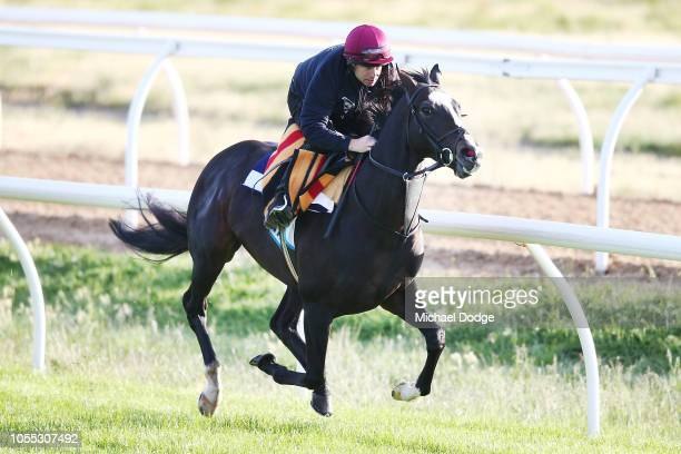 Yucatan gallops during a Werribee trackwork session at Werribee Racecourse on October 30 2018 in Melbourne Australia