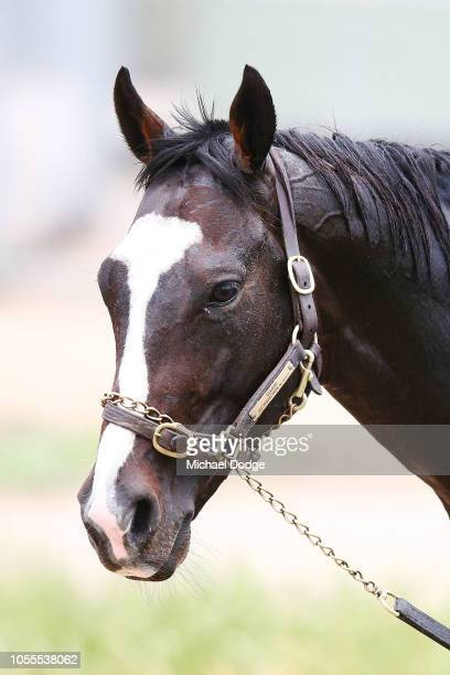 Yucatan is seen during a Werribee trackwork session at Werribee Racecourse on October 31 2018 in Melbourne Australia