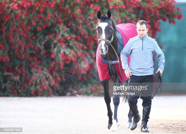 Yucatan walks laps after a gallop during a Werribee trackwork session at Werribee Racecourse on October 30 2018 in Melbourne Australia