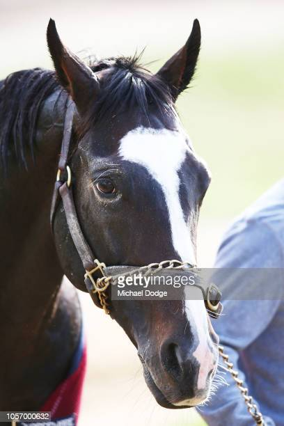 Yucatan walks laps during a Werribee trackwork session at Werribee Racecourse on November 4 2018 in Melbourne Australia
