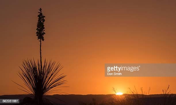yucca and rising sun - don smith stockfoto's en -beelden