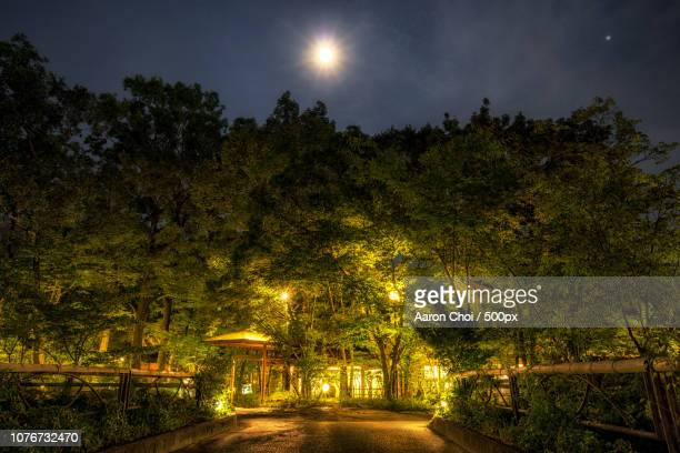 Yufuin golden forest at night