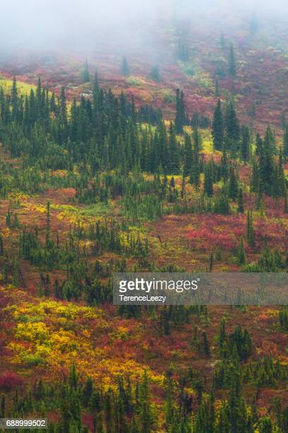 Yukon Mountains of the colorful tundra in autumn among spruce trees in fog