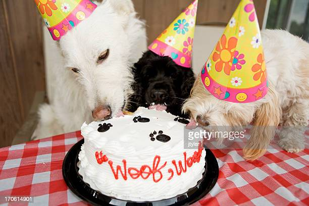 yum! - happy birthday cat stock photos and pictures