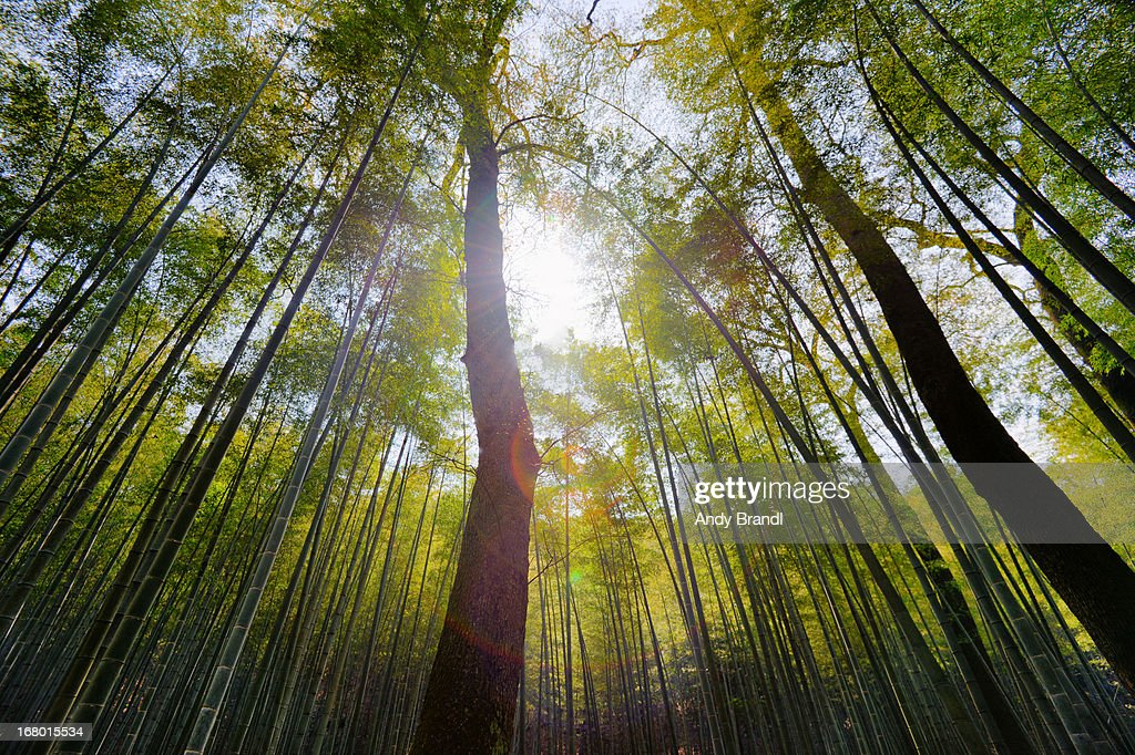 Yunqi Bamboo Forest : Stock Photo