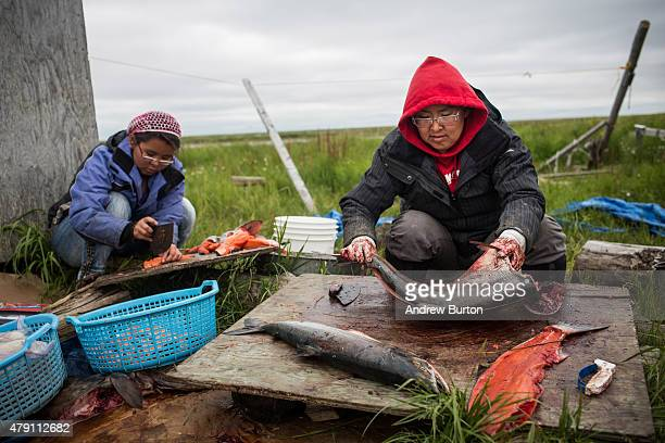 Yupik women prepare freshly caught salmon for curing on June 30 2015 in Newtok Alaska Newtok which has a population of approximately of 375...
