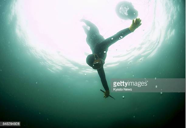 Yushi Ikeda a free diver in the Azena district of Shima in the central Japan prefecture of Mie, dives in the sea to gather abalone on June 20, 2016.