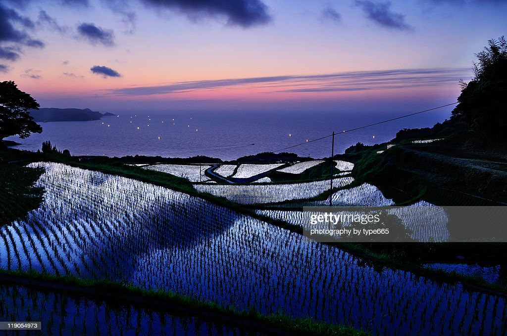 Yuya rice terrace : Stock Photo