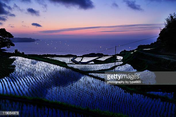 Yuya rice terrace