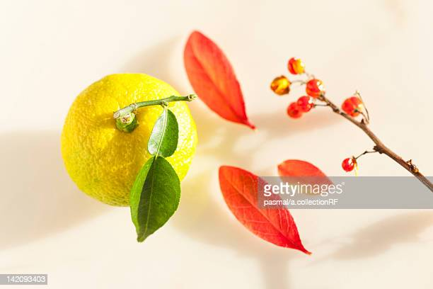 Yuzu Fruit and Autumnal Leaves