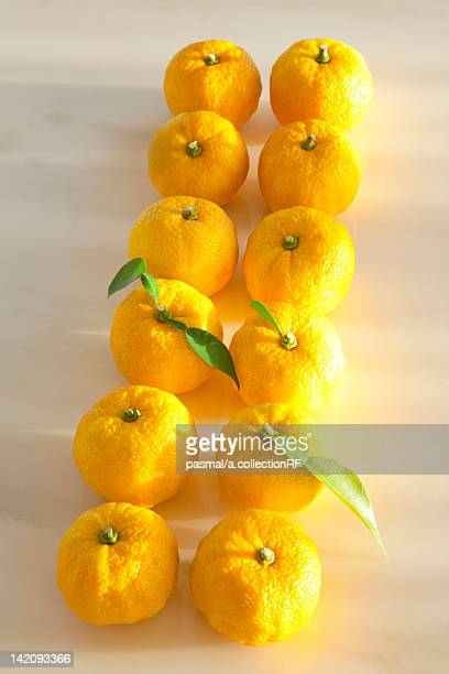 Yuzu Fruits in Two Rows