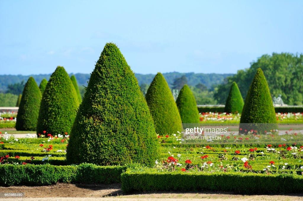 Yvelines Domaine De Versailles Les Jardins Parterre Du Midi