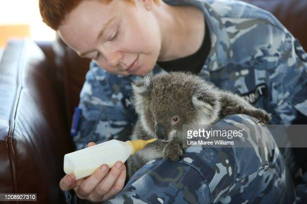 Yvonne Dennett, RAAF Leading Aircraft Woman and Medic based in Darwin feeds a koala joey affected by the recent bushfires at the Kangaroo Wildlife...