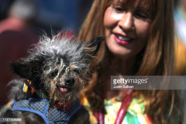 Yvonne Morones holds her dog Scamp the Tramp before the start of the World's Ugliest Dog contest at the MarinSonoma County Fair on June 21 2019 in...