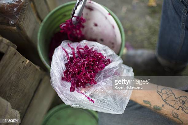 Zach Kalas measures out a pound of sauerkrout October 6 2012 at the weekly farmers' market in Millerton New York The sauerkrout was made at Moon in...
