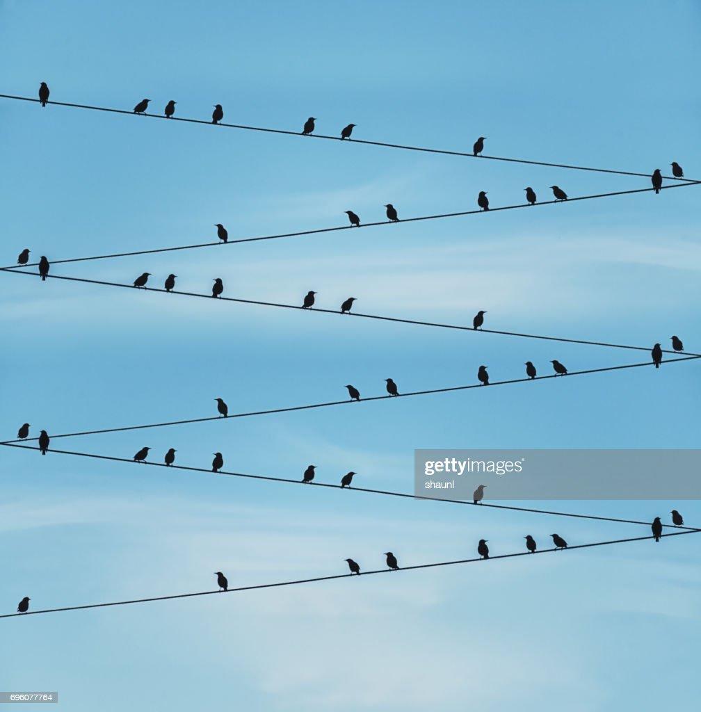 Zag Flock : Stock Photo
