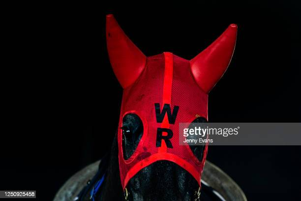 Zakspeed is seen wearing ear muffs during Sydney Racing at Royal Randwick Racecourse on June 20, 2020 in Sydney, Australia.