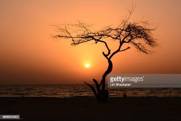 zallaq beach - bahrain foto e immagini stock