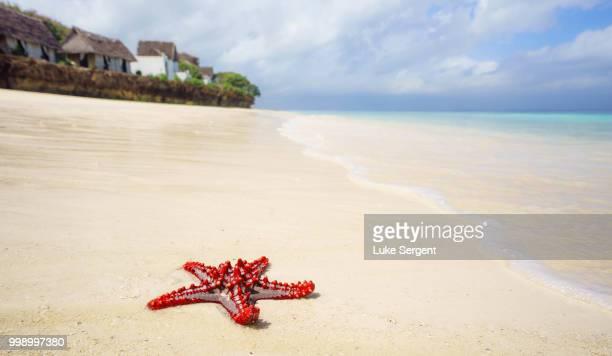 zanzibar beach - starfish stock pictures, royalty-free photos & images