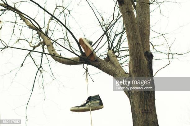 zapatillas atadas en el árbol - josemanuelerre fotografías e imágenes de stock