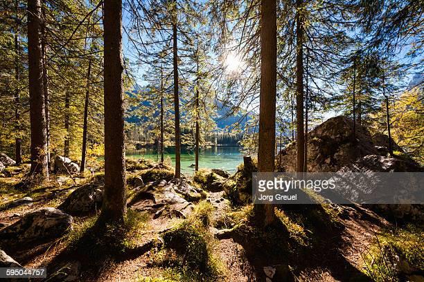 Zauberwald in autumn