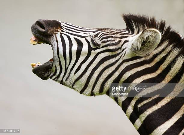 Zebra - Calling all Shoppers!
