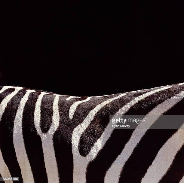Zebra (Equus sp.), detail