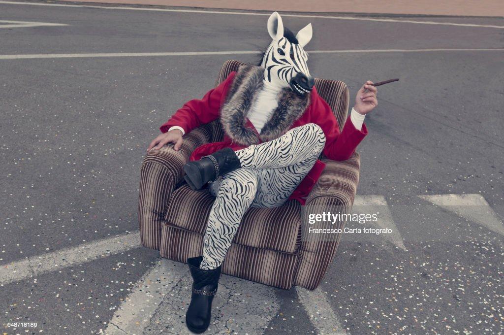 Zebra head : Stock Photo