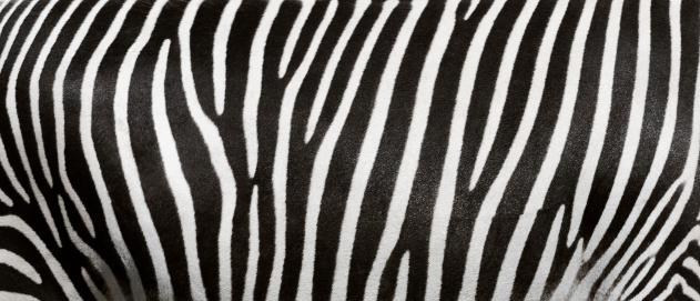 zebra stripes 171147742
