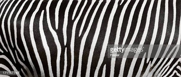 zebra stripes - zebra stock pictures, royalty-free photos & images