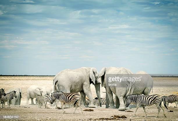 Zèbres et d'éléphants d'Afrique dans le Parc National d'Etosha, Namibie