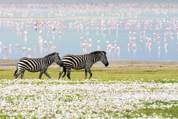 """zebras, flowers and flamingos"""