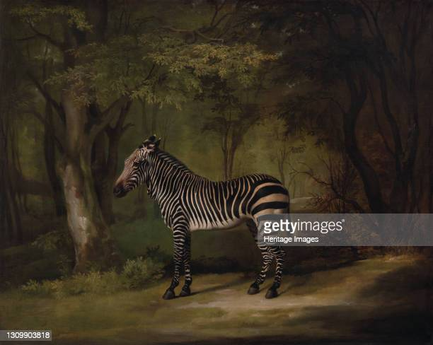 Zebra;The First Zebra Seen in England;Portrait of a Zebra, standing, turned to the left, in a park, exhibited 1763. Artist George Stubbs. .