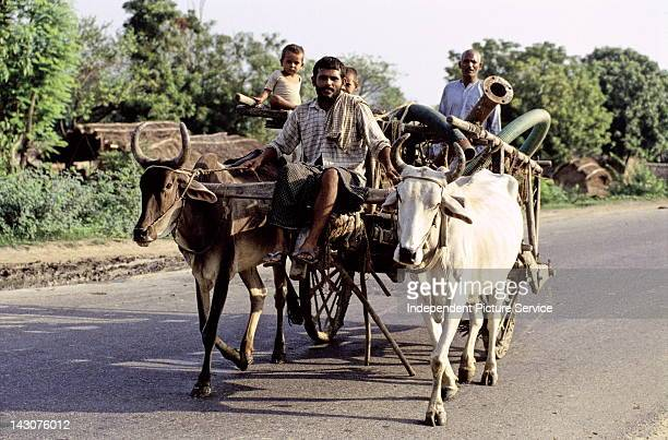 Zebu cattle pulling a cart loaded with men children and pipes India