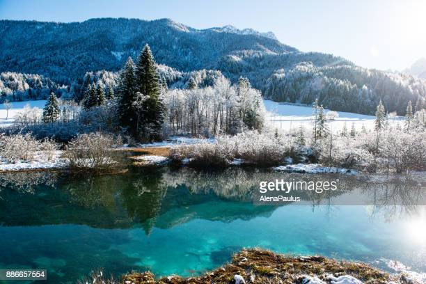 zelenci in winter - slovenia stock pictures, royalty-free photos & images