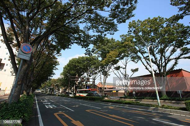 zelkova trees lining road by jr maebashi station north entrance - maebashi city stock photos and pictures