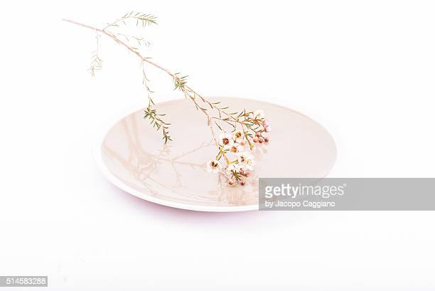 zen dish with flowers - jacopo caggiano stock pictures, royalty-free photos & images