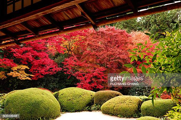 Zen garden with autumn leaves in Shisen-do Jozanji Temple, Kyoto.