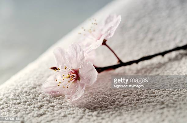 Zen Spa Concept with Towel and Flower