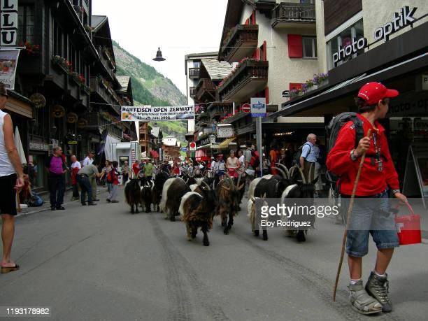 zermatt - pastora vega fotografías e imágenes de stock